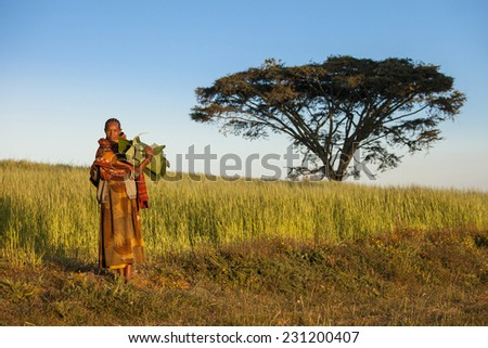 GOJO, ETHIOPIA-NOVEMBER 6, 2014: An unidentified woman carries banana leaves in the ethiopian countryside with a lone acacia tree behind her. - stock photo