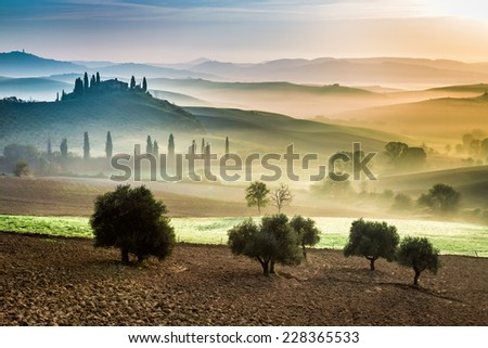 Gold and green fields in the valley at sunset, Tuscany - stock photo