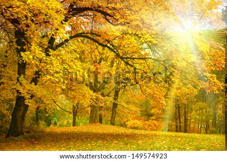 Gold Autumn with sunlight  and sunbeams / Beautiful Trees in the forest - stock photo