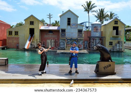 GOLD COAST, AUS -  NOV 06 2014:Australian sea lion during a show in Sea World Gold Coast Australia.It is a species of sea lion that breeds only on the south and west coasts of Australia. - stock photo