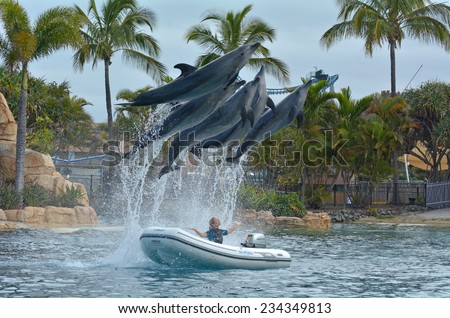 GOLD COAST, AUS -  NOV 11 2014:Dolphin show in Sea World Gold Coast Australia.It's marine theme park that promote conservation education, rescue and rehabilitation sick, injured or orphaned wildlife. - stock photo