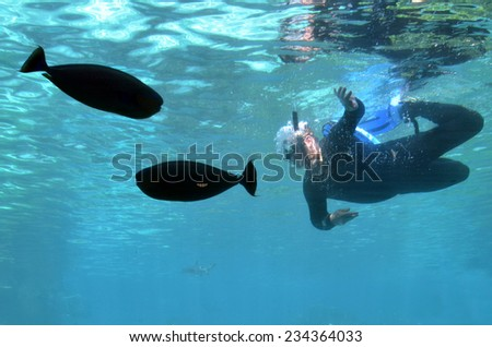 GOLD COAST, AUS -  NOV 11 2014:Man dive in Shark Bay touch pool at Sea World Gold Coast Australia.It is the world's largest man-made lagoon system for sharks. - stock photo
