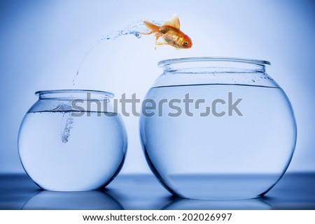 Gold Fish - stock photo