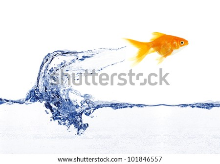 gold fish jumping over slash blue water - stock photo