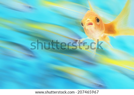 Gold fish with school of fish in motion in background, digital composite - stock photo