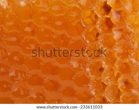 Gold honey      - stock photo