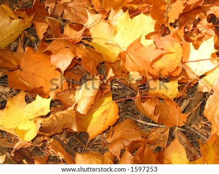 gold leaves - stock photo