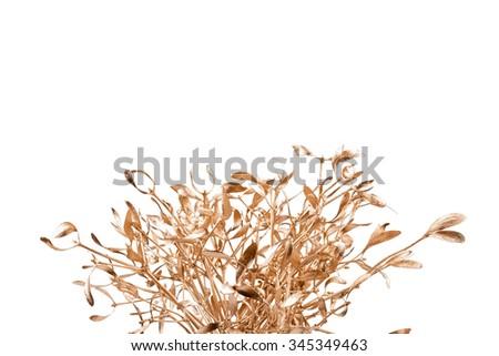 gold mistletoe on white background - stock photo