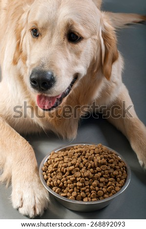 Gold retriever with petfood - stock photo