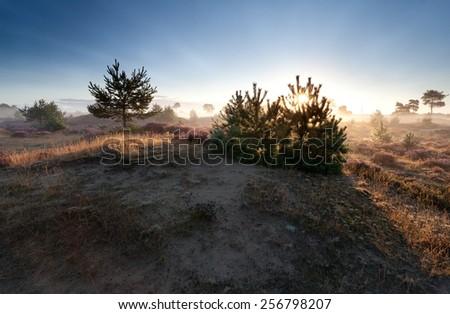 gold sunbeams at misty summer sunrise, Drenthe, Netherlands - stock photo