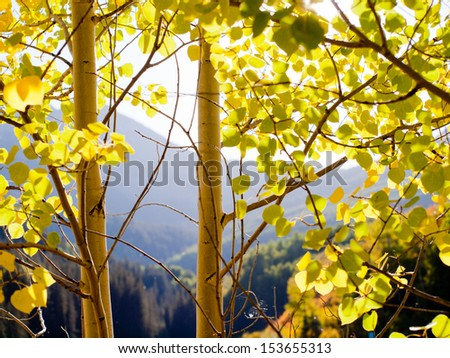 Golden aspens at the Woods Lake, Colorado. - stock photo