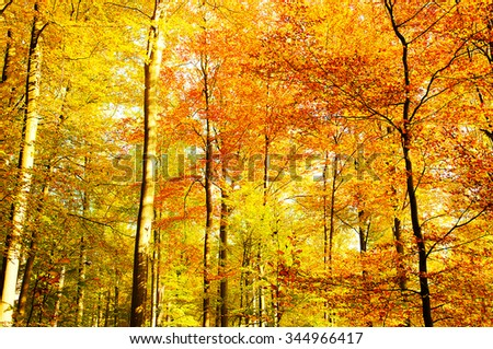 Golden autumnal forest - stock photo