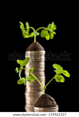 Golden coins and plant - money growth concept. Dark background - stock photo