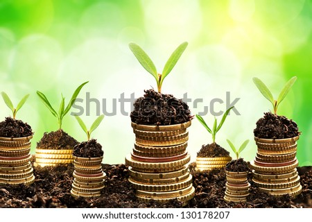 Golden coins in soil with young plant isolated. Money growth - stock photo
