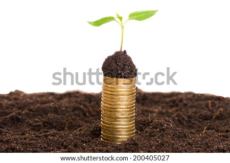 Golden coins with young plant. Money growth concept. - stock photo