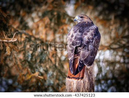 Golden Eagle on a tree - stock photo