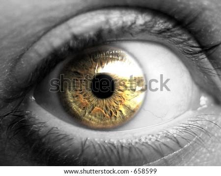 golden eye - stock photo
