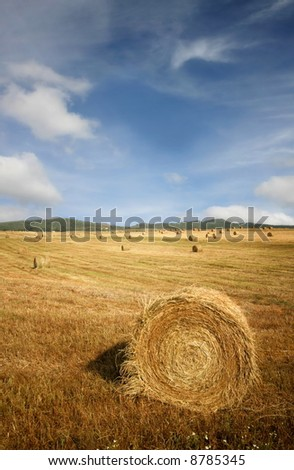 Golden field - stock photo