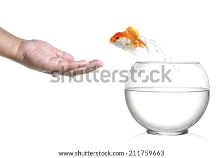 Golden fish jumping out of fishbowl and into human palm isolated on white - stock photo