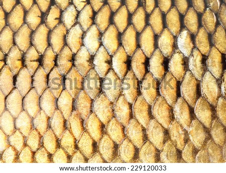 Golden fish scales background - stock photo