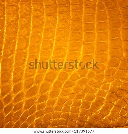 Golden Freshwater crocodile skin texture background - stock photo