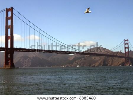 Golden Gate Bridge with bird - stock photo