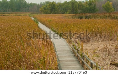 Golden grass fills up the dried up swamp at Maumee Bay State Park. - stock photo