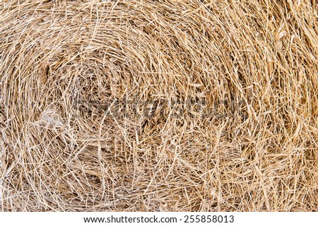 Golden hay background, bale, straw, haystack, yellow - stock photo