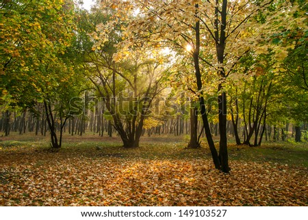 Golden leaves on branch, autumn wood with sun rays, beautiful landscape - stock photo