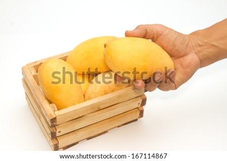 Golden mangoes, a delicious Thai fruit - stock photo