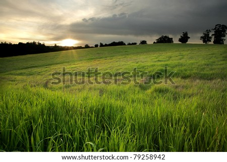 Golden Meadow at Sunset - stock photo
