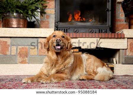 Golden retriever dog lies near fireplace - stock photo
