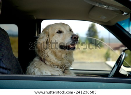 Golden Retriever in Car - stock photo