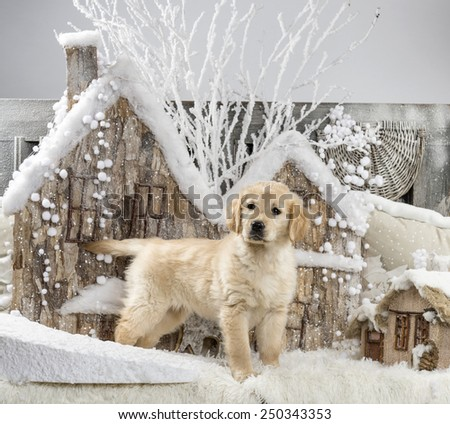 Golden Retriever in front of a Christmas scenery - stock photo