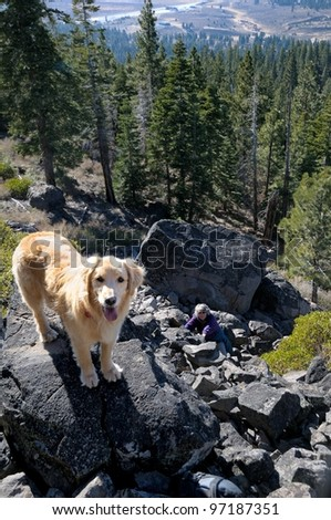 Golden Retriever on top of Boca Hill in Tahoe national forest in the California Sierra Nevada mountains - stock photo
