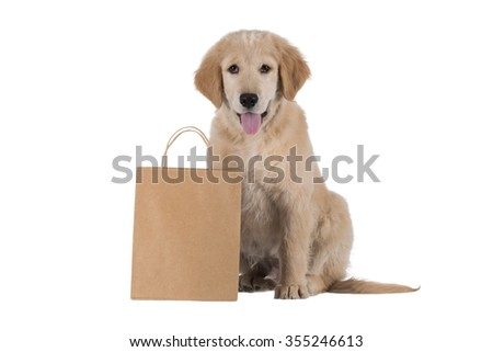 Golden Retriever puppy sitting with bag isolated on white background - stock photo