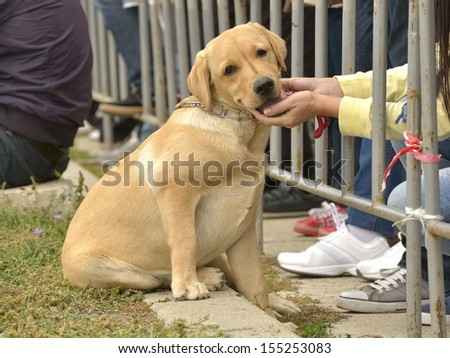Golden retriever puppy with woman hands holding his head in a public place - stock photo