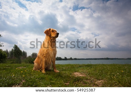 Golden Retriever Sitting in Sunlight against cloudy sky - stock photo