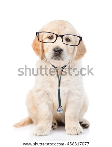 Golden retriever with a glasses and stethoscope on his neck.looking at camera. isolated on white background - stock photo