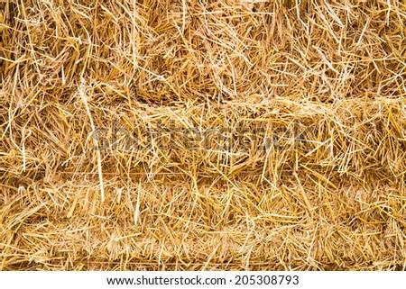 golden straw texture background - stock photo