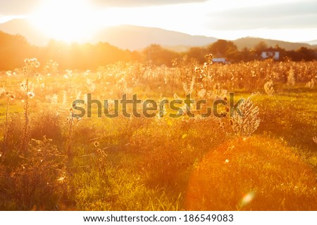 Golden summer evening on the meadow on mountains , rural summer backgrounds - stock photo