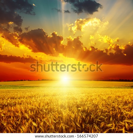 golden sunset over field with harvest - stock photo