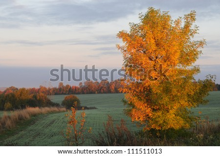 Golden tree against the green fieald makes a striking picture. This is  mellow autumn. - stock photo