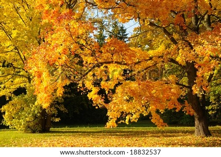 golden trees - stock photo