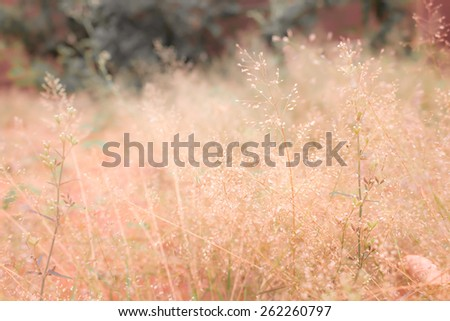 golden vintage spring grass field background wallpaper - stock photo