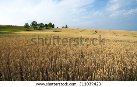 golden wheat field in summer time, rural scene - stock photo