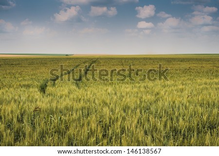 Golden wheat field with blue sky - stock photo