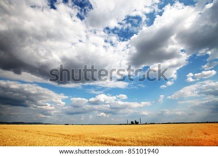 Golden wheat field with cloudy sky in background - stock photo