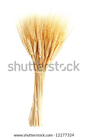 Golden wheat isolated on white - stock photo