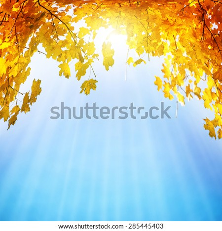 Golden, yellow and orange leaves under sunbeams from the blue sky. Autumn background - stock photo